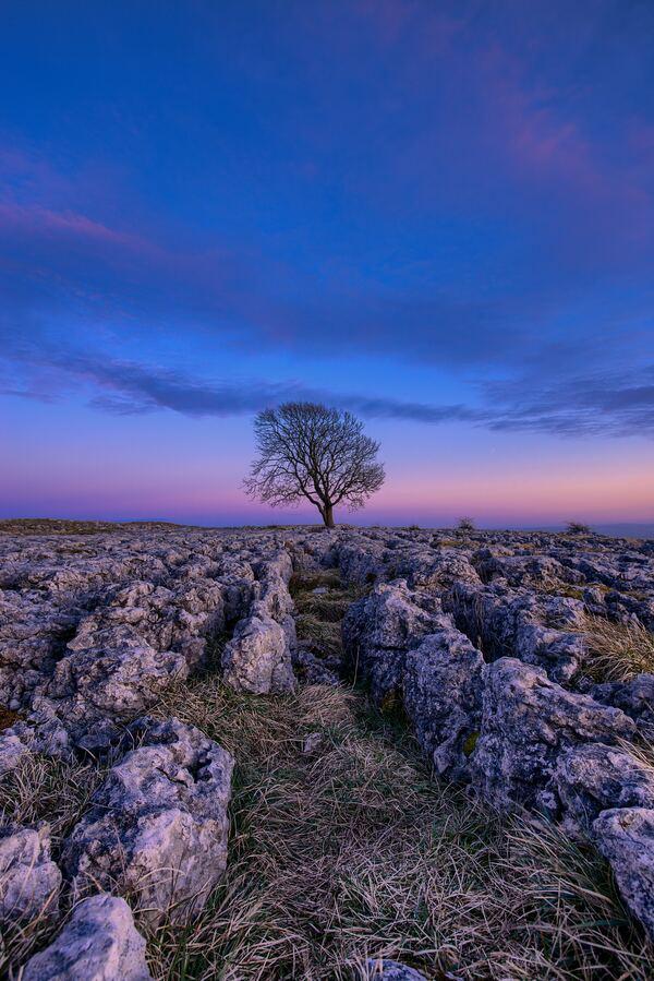 uma árvore entre um céu azul e rosa