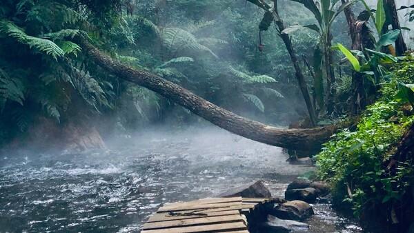 un rio en la selva