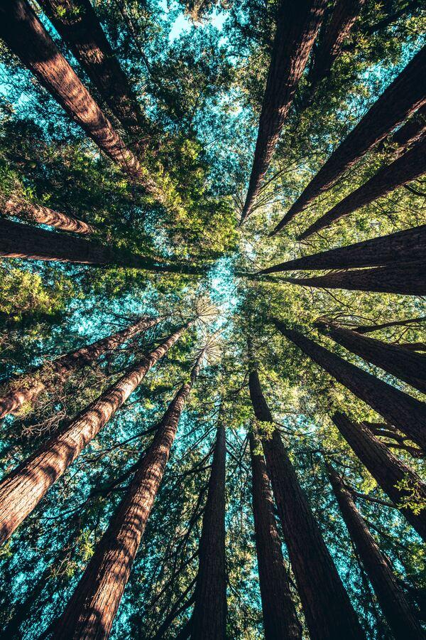 Día Mundial del Árbol 09