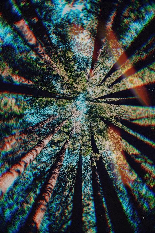 Día Mundial del Árbol 10