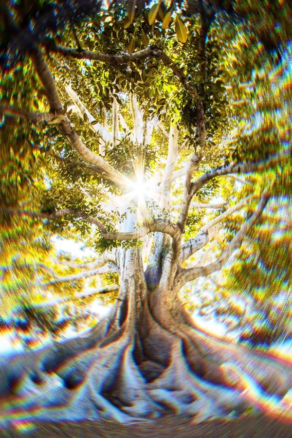 Día Mundial del Árbol 02