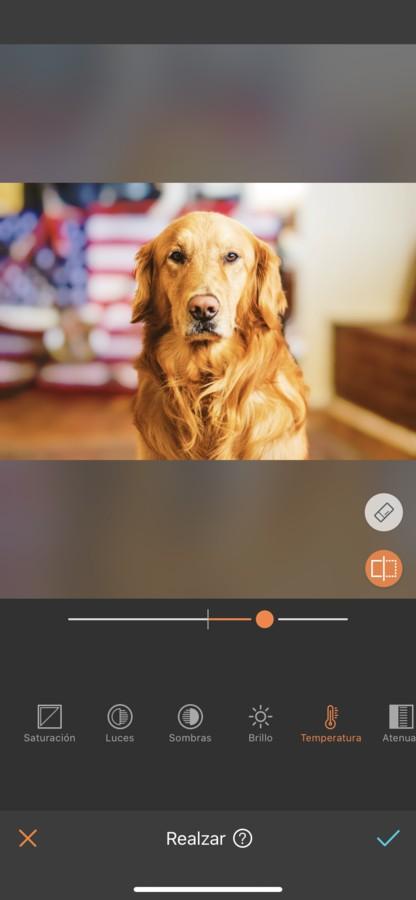 fotos para tu perro 11