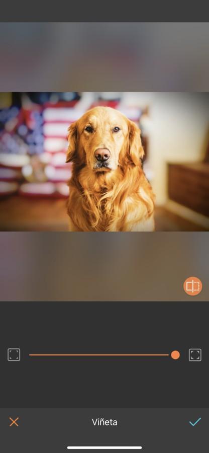 fotos para tu perro 12