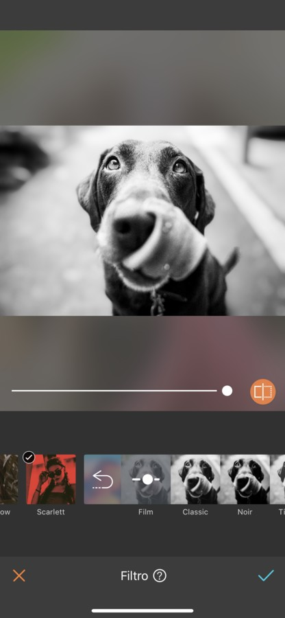 fotos para tu perro 16