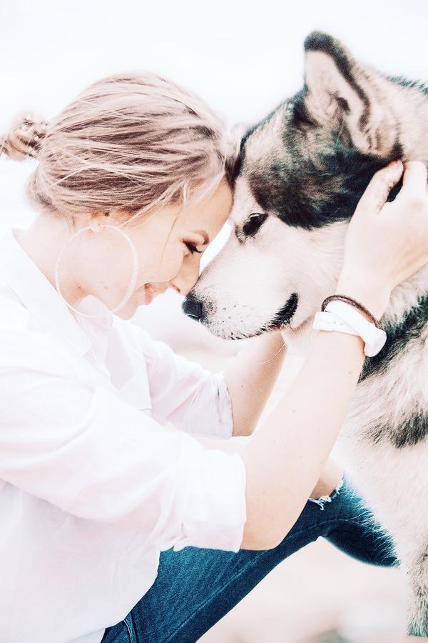 fotos para tu perro 02