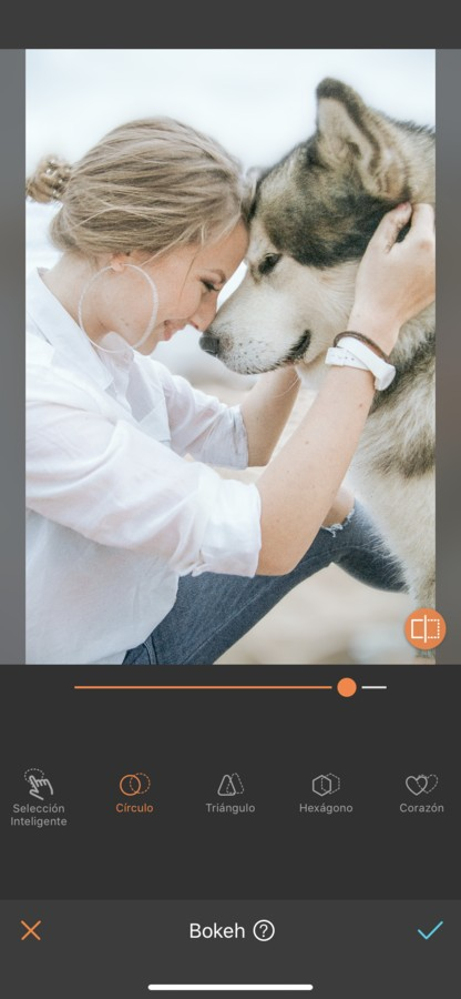 fotos para tu perro 03