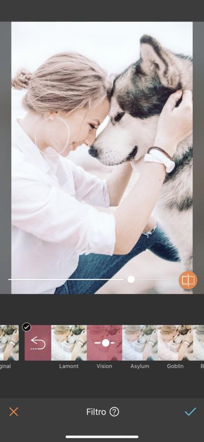 fotos para tu perro 04