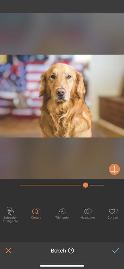 fotos para tu perro 08