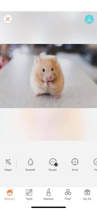 Photos animalières 18
