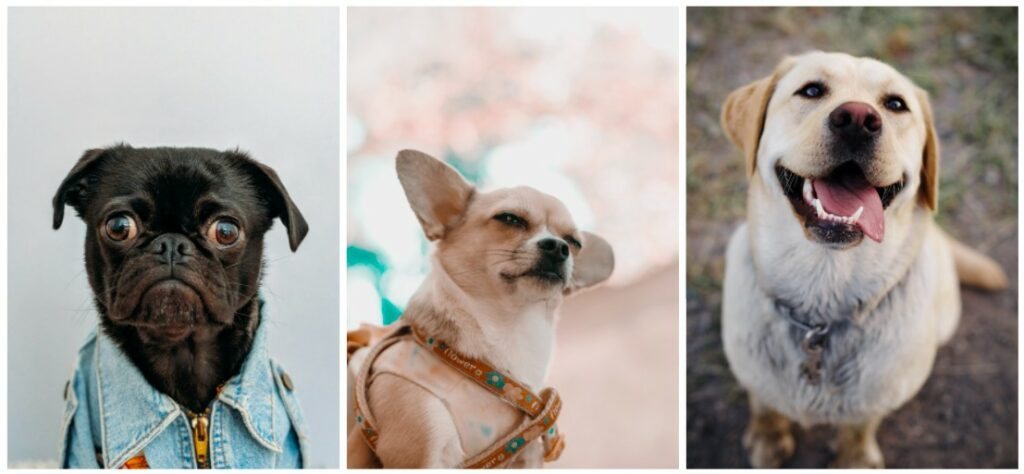 fotos de perros sonriendo y siendo expresivos