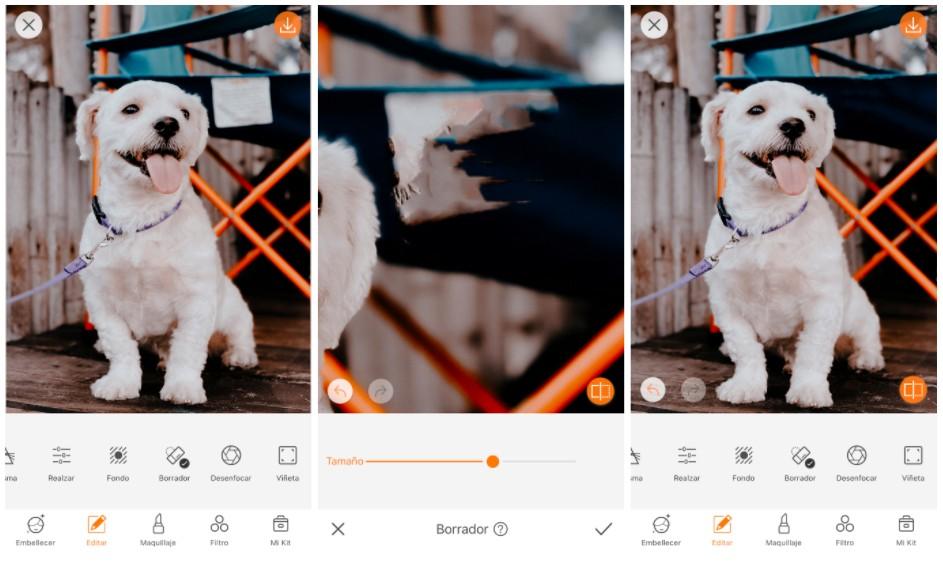 foto de perro usando la herramienta borrador