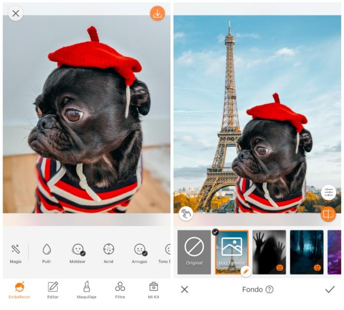 perro pug enfrente De la Torre Eiffel vestido de francés