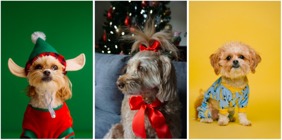 fotos de perritos al estilo navideño