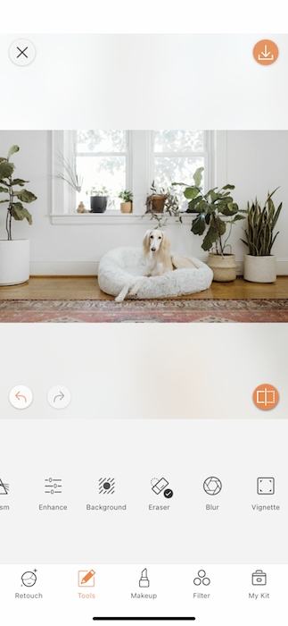 dog sitting in a dog cushion in a living room full of plants
