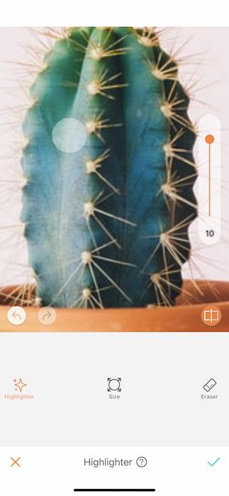 closeup of cactus plant