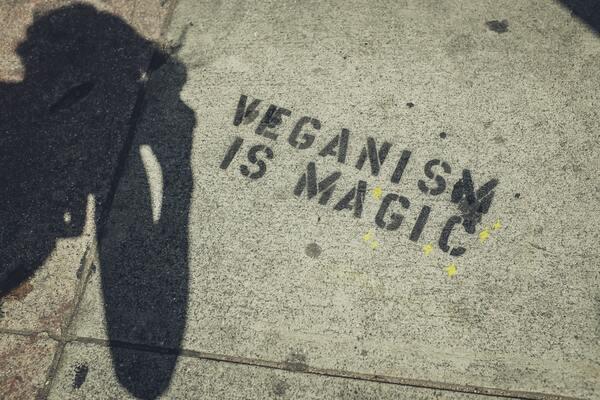 """Imagem do chão com a frase """"Veganism is Magic"""" pintada."""