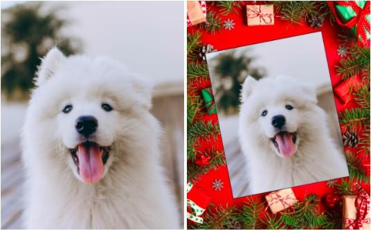 foto navideña de perros