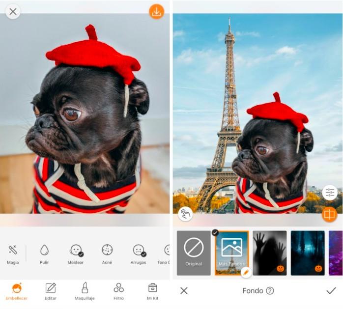 Cómo crear una foto de tu mascota