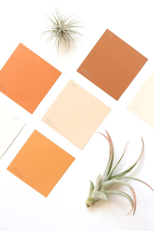 Imagem mostra quatro quadrados preenchidos por cores em tons terrosos com duas plantas de cada lado