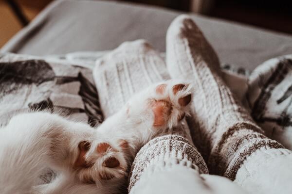 Pés cobertos por meias ao lado de patas de cachorro