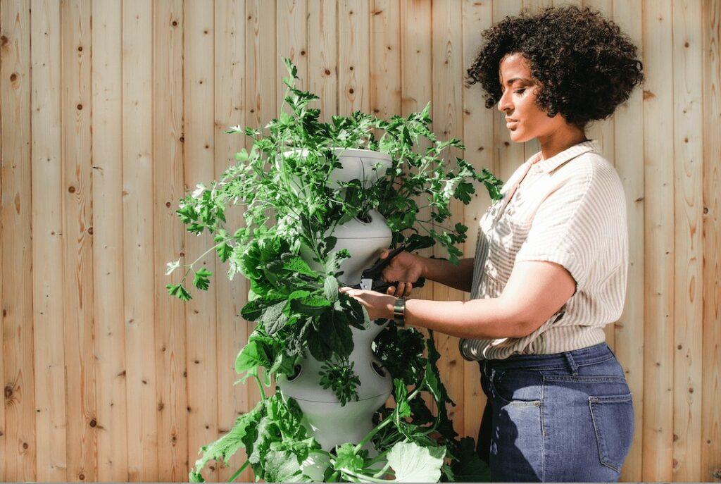 woman tending plants in her garden